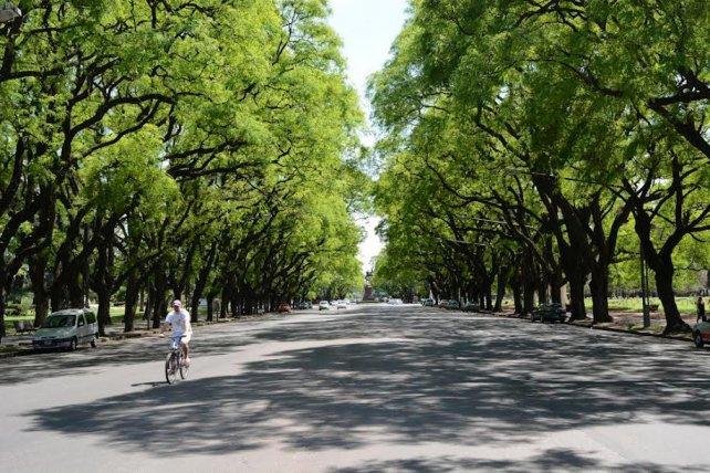 El rbol urbano el mejor aliado de una ciudad sustentable for El mejor arbol para plantar en casa