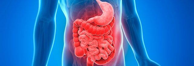 Una aliada para detectar las hemorragias digestivas