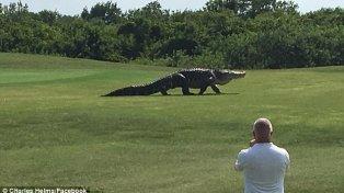 Una empleada del campo de golf, Wendy Schofield, dijo que ese animal, que mide más de cinco metros de largo, está en la zona desde hace varios años.