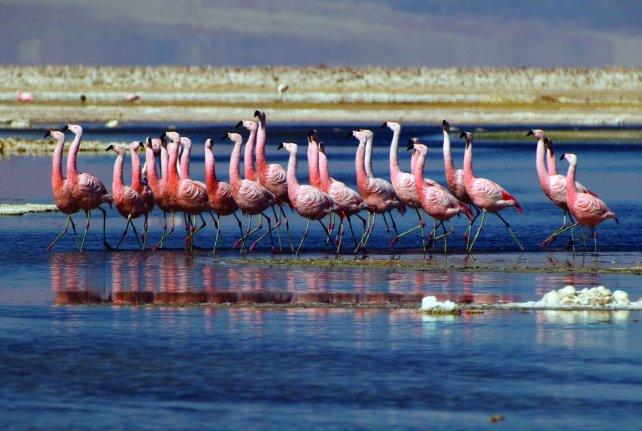 Los flamencos, una atracción de la Laguna de Chaxa.