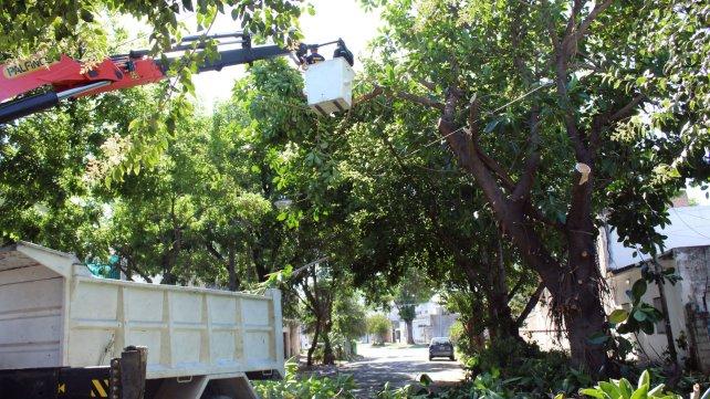 Poda y despeje de luminarias en barrio Carlos Casados (Distrito Centro)