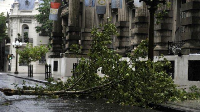 Una rama caída interrumpió el tránsito frente a la sede local de Gobernación