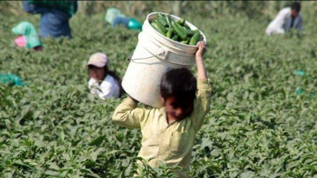 El campo sigue siendo uno de los sectores que registra altos niveles de trabajo infantil.