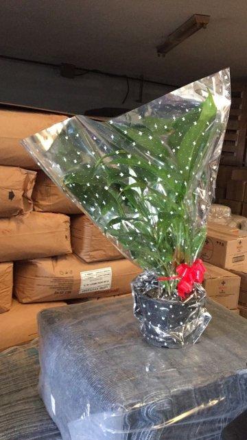 La planta que la pareja presidencial llevó como regalo para Elisa y Jorge.